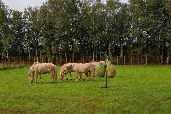 paarden spetse hoeve